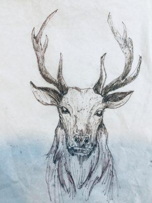 Brown Ink Sketch of Stags Head